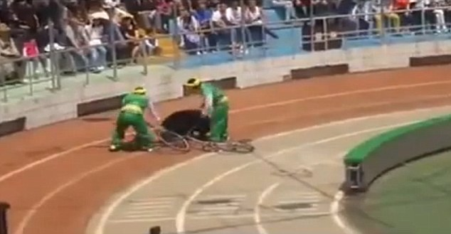 The bear then attacks the animal lying under the bike in front of the shocked animal park crowd