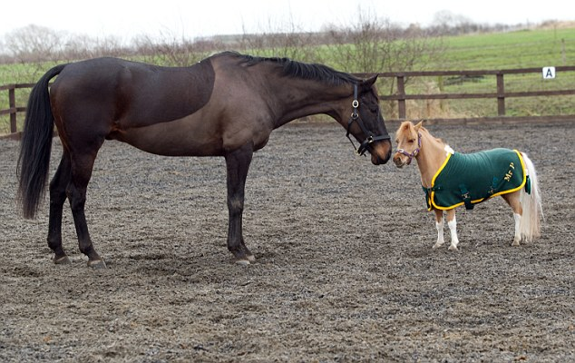 Sweet: Wearing a fetching personalised jacket, Mr P spends a bit of time playing with a horse in the paddock