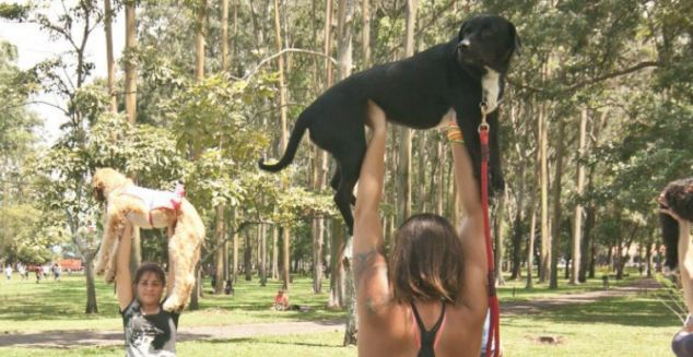 Stretch: Marcela Castro, 29, from San Jose, Costa Rica, has been running doga classes for 3 years after taking one of her six dogs to a yoga class with her