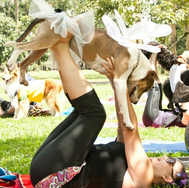 Working out: A doga devotee holds her dog in the air as she stretches