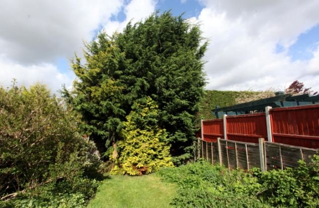 The tree leans over Miss Spiers' garden fence. The 63-year-old was ordered to reduce its height by May last year