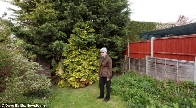 Miss Spiers' neighbours have complained that the hedge blocks sunlight and leaves their gardens in darkness for two hours a day