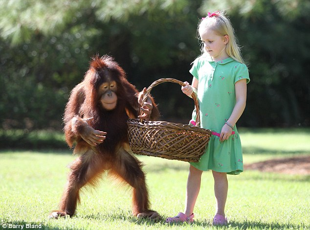 The pair were introduced at an animal reserve in the US when Emily¿s photographer father, Barry, took his daughter along on an assignment