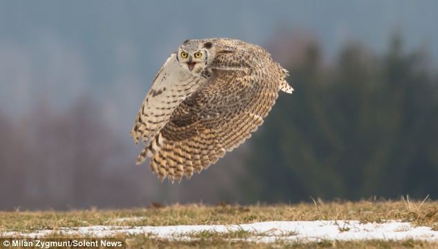 Skimming close to the ground: