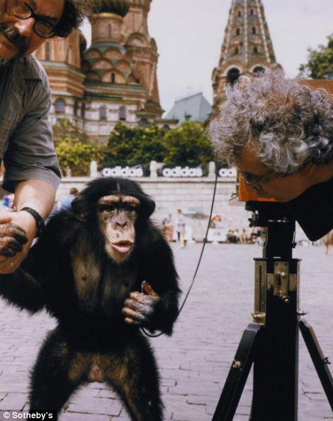 Mikko the chimpanzee