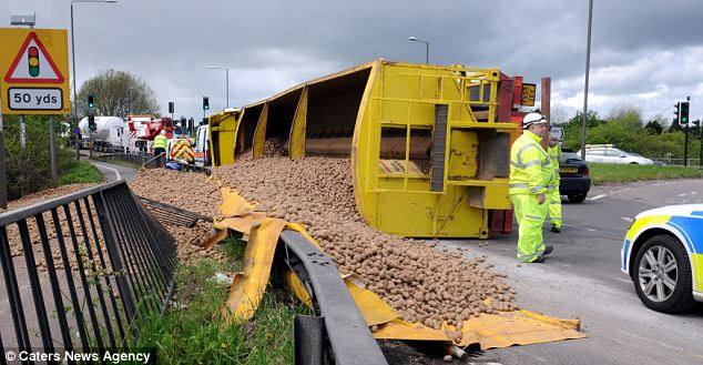 What a s-mash: Forty-four tons of potatoes lie spilled over a roundabout on the A38 near Little Eaton, Derbyshire, when the lorry carrying them overturned while coming off a roundabout