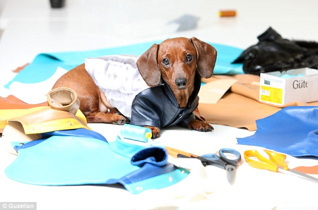 Canine couture: Fanta the Dachshund models the kind of tailor-made jackets which sell for up to £900 at the boutique in London