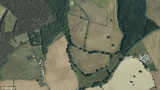 This image is one of the faces found in the UK. It was taken next to Priory Road in Ashford in Kent and could be either a human face in profile, or the face of an animal. Trees appear to form the face's mouth and nostrils