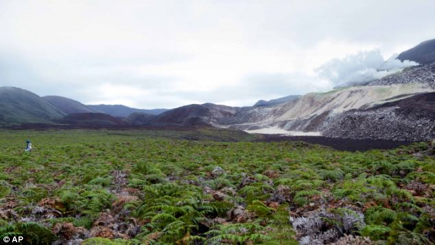 Daniel Orellana is shown crossing a field of ferns to reach some naturally occurring sulfur mines on the top of Sierra Negra, an active volcano on Isabela Island in the Galapagos.