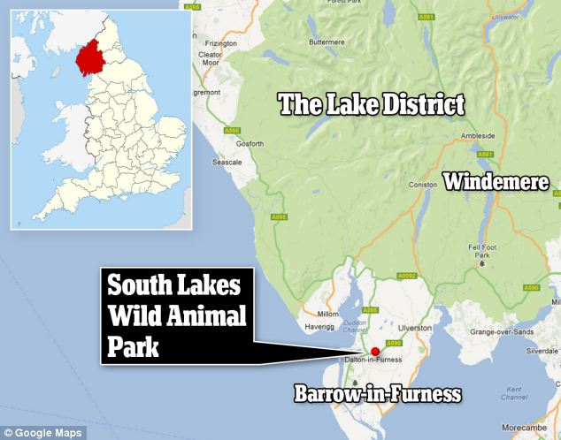 South Lakes Wild Animal Park in Dalton-in-Furness was closed early after the attack