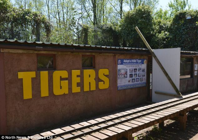 Attack: Keeper Sarah McClay was mauled to death after entering the tiger enclosure