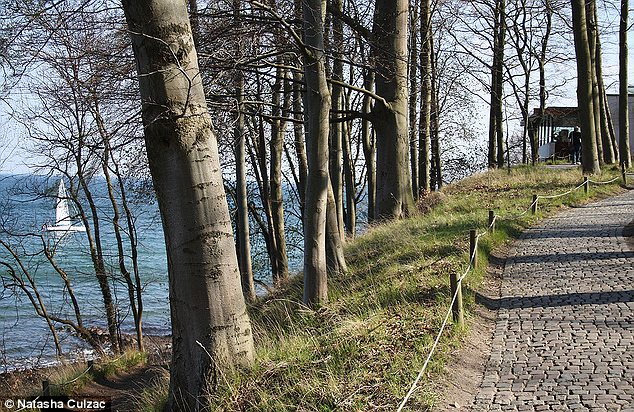 Idyllic: Cycling is one of the best ways to get around in Denmark, particularly along the picturesque woodland paths in Louisiana