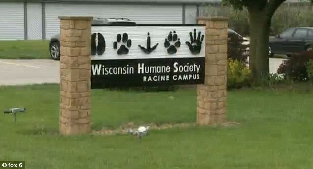 History of violence: The pit bull bit another person in 2009. After attacking the toddler, police turned the dog over to the Wisconsin Humane Society where it is set to be euthanized