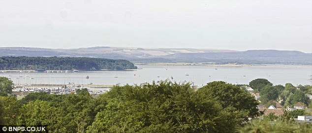 Once the tree was felled, it offered a perfect view over Poole Harbour from Neil Davey's Parkstone home