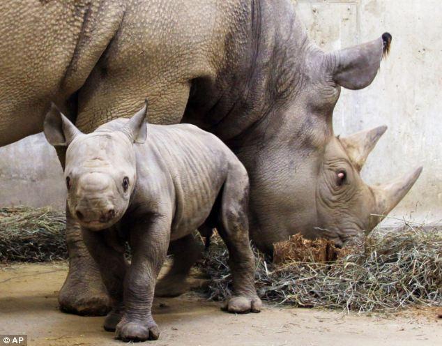 Human population animal extinction