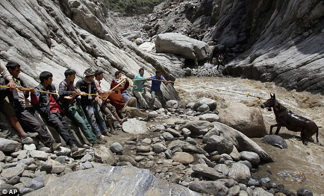 Pull: The rescue mission extends as far as a stranded donkey, caught up in the mudslide