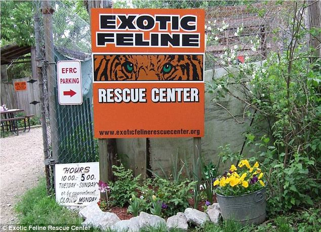 Prepared? After a similar attack occurred at a wildlife park in California in March, the owner of the Exotic Feline Rescue Center was interviewed about their safety procedures