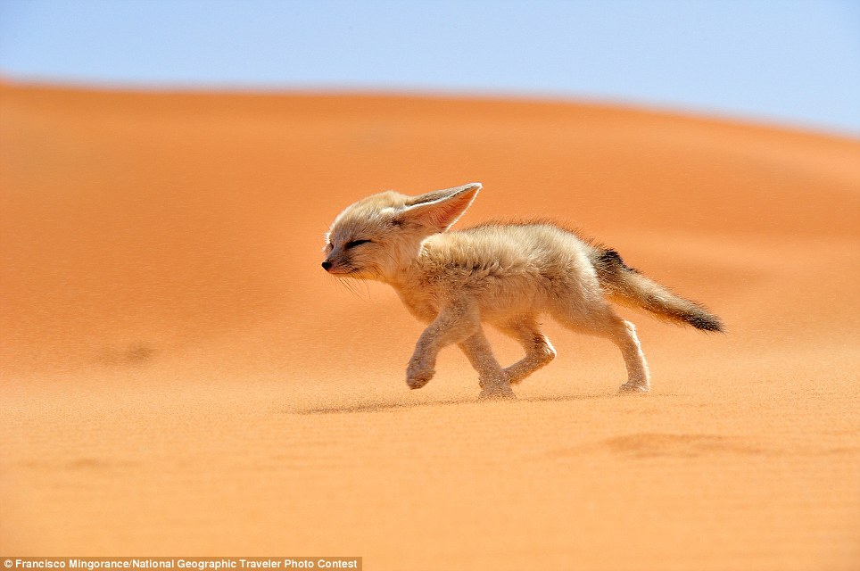 FÈnec The Soul of The Desert: