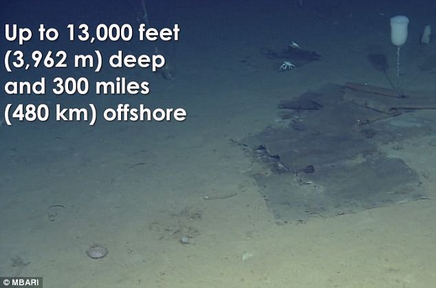 Slimy deep: Researchers found more trash the deeper they dove, especially in rocky, sloping areas