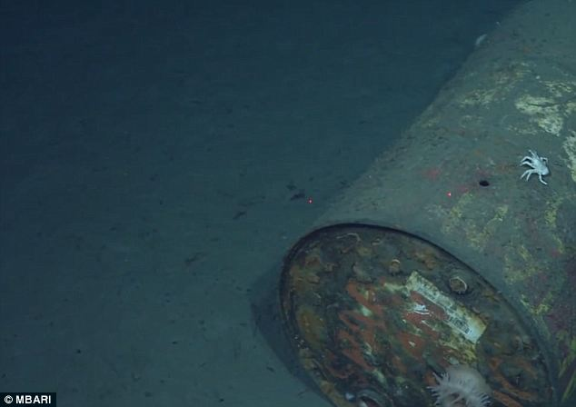 Mystery drum: A ghostly crab crawls along a 55-gallon drum cast to the bottom of the Monterrey Canyon off the coast of California. More trash was found in this deep sea ravine than anywhere else