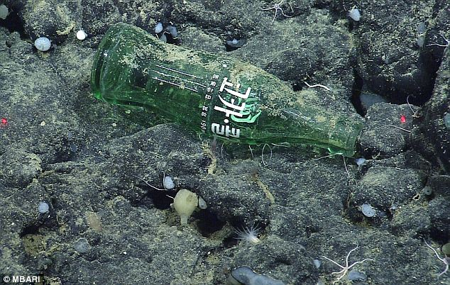 Not so refreshing: A Coke bottle keeps company with tiny starfish