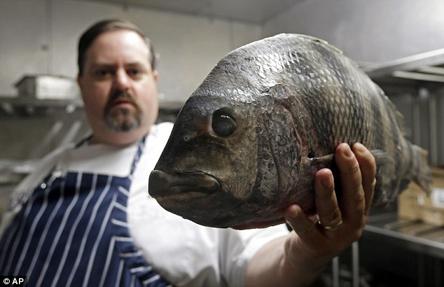 Alternative ingredients: James Clark, executive chef at Carolina Crossroads Restaurant holds a fresh sheepshead fish, which is rarely seen on menus, in his kitchen in Chapel Hill, North Carolina