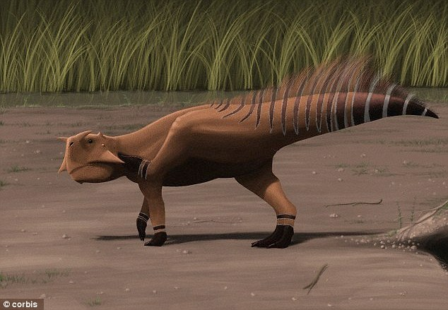 Analysis of bones 100 million years old showed baby Psittacosaurus had long arms and short legs, which were used to scuttle around shortly after hatching