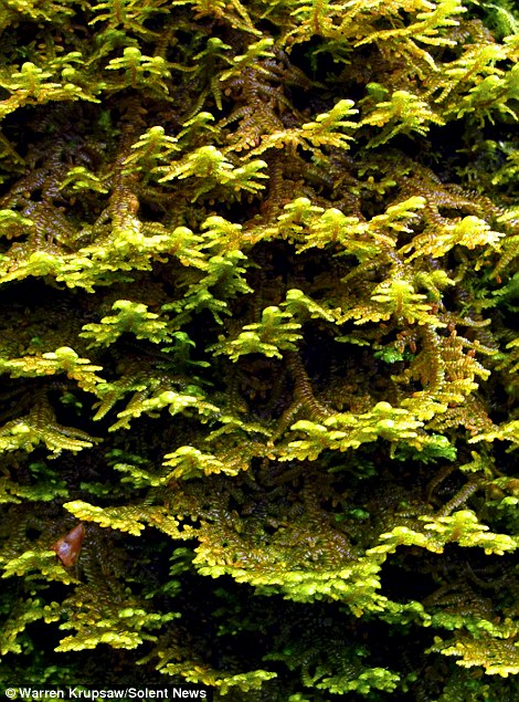 These extreme close up photographs show the intricate detail of moss that smothers trees
