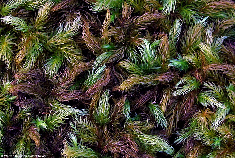 A nature photographer has taken close-up photographs of the moss, showing its vast differences in pattern, colour and texture