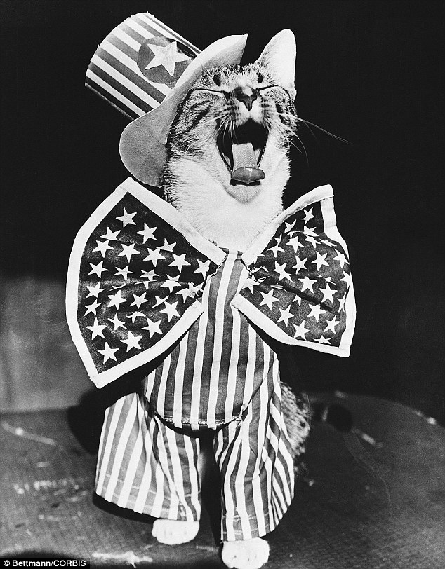 Purr-fect patriot: A cat dressed as Uncle Sam in 1956 looks like he is singing the Star Spangled Banner