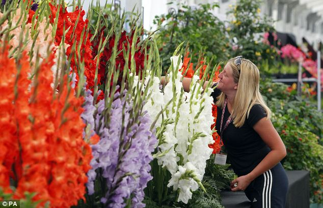 Gemma Greenwood puts the finishing touches to a display by Glens Gardens, on display at the RHS Hampton Court Palace Flower Show