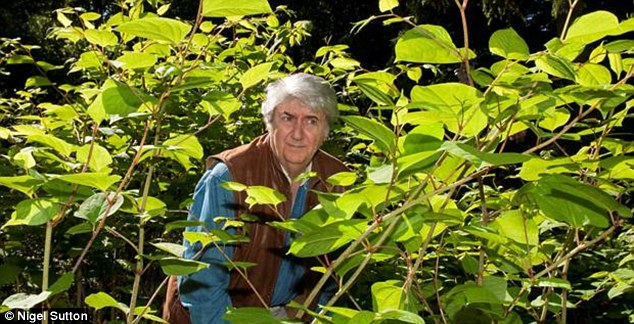 Actor Tom Conti has compared the weed to a Triffid after it began spreading along a path linking celebrity homes in Hampstead, north London