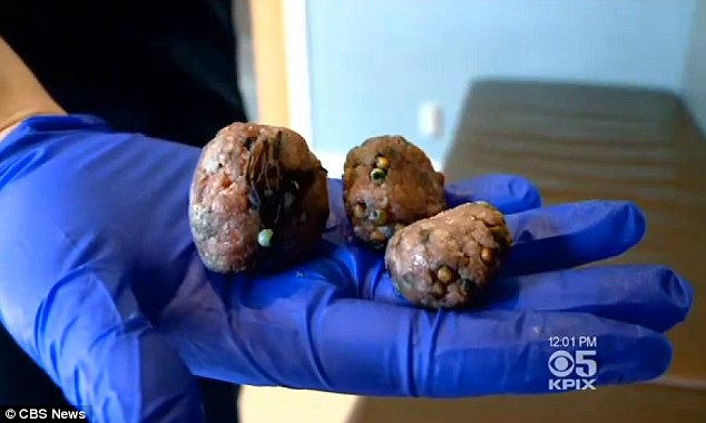 Yuk: Police still do not know who made the meatballs, believed to contain the poisonous substance strychnine, or left them in the street, but the investigation is ongoing