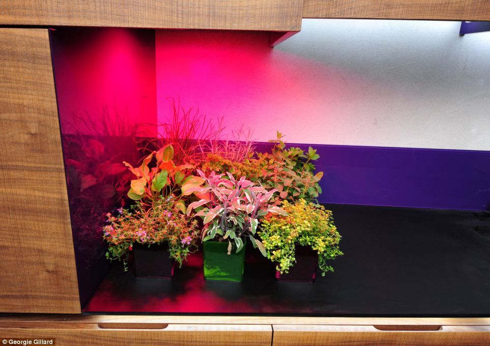 The house is spread over two levels and because there are no windows in the basement,an LED Growlight, pictured, hidden beneath wall units keeps plants and herbs alive while a watering system can be operated remotely while on holiday.