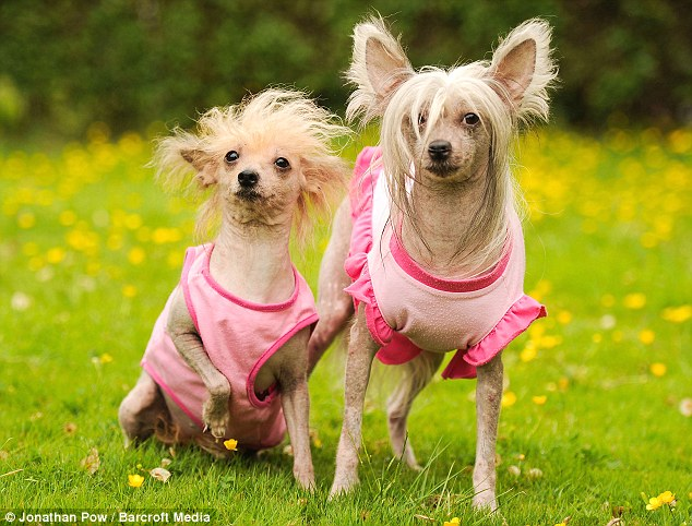 Skinny dogs Foxy and Melissa get clothes made for them by owner Diane, who says they make great pets
