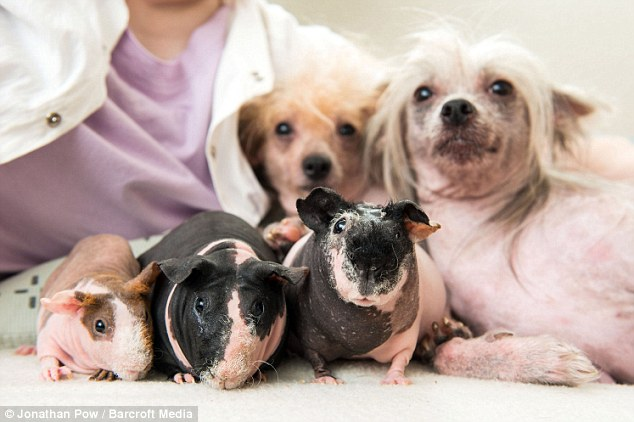 The latest craze sweeping the pet market is bald versions of your favourite furry friends