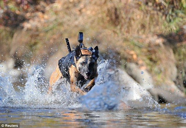 Signaling: The device will allow the dog using it to activate a signal which is sent to its handler through an earpiece