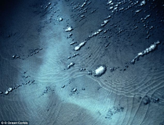 A surge in biological life 14,000-years-ago including plankton blooms (pictured) was the result of a perfect combination of nutrients and light