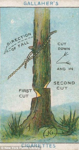 Sage advice: For those who need advice on chopping down trees from a cigarette card