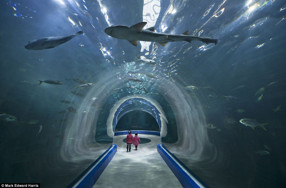 Here, he photographed two small girls in matching pink coats as they walk through the enormous 6,030-ton tank in the Aqua Planet Yeosu aquarium