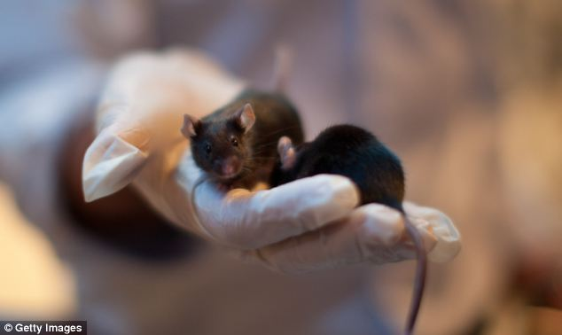 In experiments that have turned science fiction into reality, researchers from the Massachusetts Institute of Technology have succeeded in implanting false memories into the brain of mice.