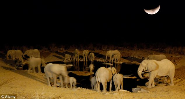 Researchers found that African elephants picked the darkest nights to raid crop fields