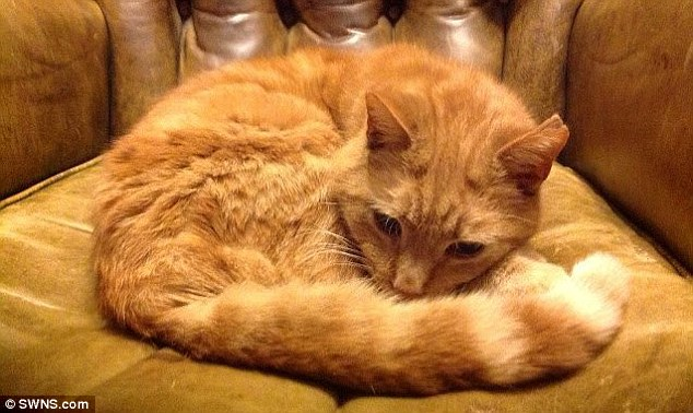 The ginger tom cat woke Ms Silver when it crept in her bedroom at night and started to fight with 15-year-old Gem, pictured