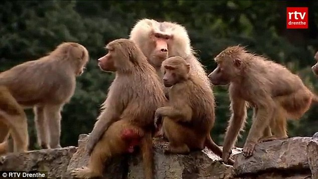 Traumatised: The team at the zoo consulted outside experts, but they have so far failed to shed any light on the mystery