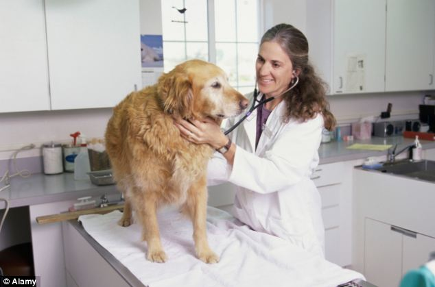 Animal owners have been advised to contact their vet immediately if they believe their pet has eaten something toxic