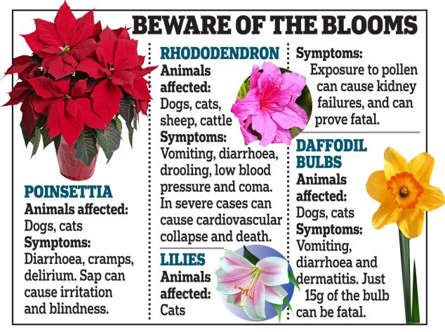Pet owners have been warned a number of household flowers can be harmful to their animals