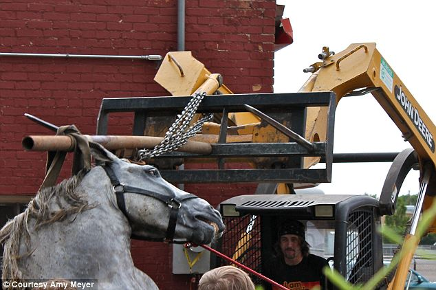 Changes? The animal reportedly suffered a bout of colic, which caused the collapse. Animal advocates are now calling for a ban on horse drawn carriage rides in the Utah city