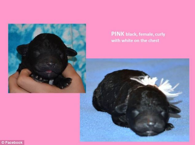 Hello world: Originally called Pink, this puppy is believed to have grown into the world famous mutt we all now know as Sunny
