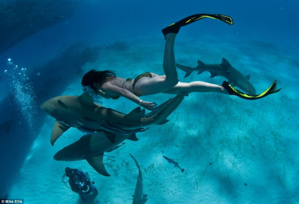 Free dive: Rochat said she hoped images such as these of her with a lemon shark will help change perceptions about this important creatures