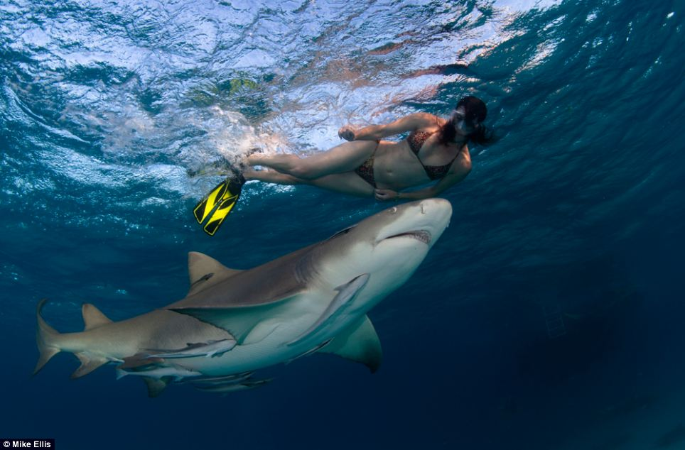 'Shark warrior': Lesley Rochat said she wanted to make herself as vulnerable as possible to the tiger shark by swimming in a bikini